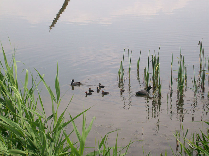 Charity-collana-berlin-Naturschutz-Enten