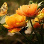Gedicht-Wer-Schmetterlinge-lachen-hoert